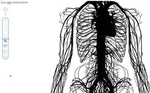 Google Body Browser: la anatomía humana en 3D - RedUSERS