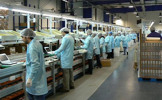 Según Maraschin, trabajan 50 personas sólo en la fabricación de motherboards.