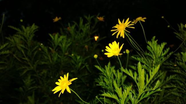 El enfoque manual junto con flash de noche generan efectos muy interesantes.