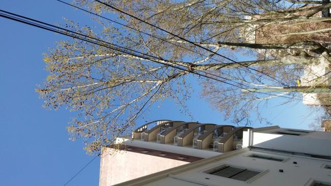 Imagen tomada haciendo foco con el edificio.