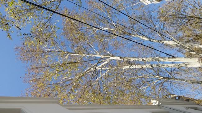 En este caso, el láser no pudo calcular bien cuando se lo apuntó hacia las ramas del arbol.