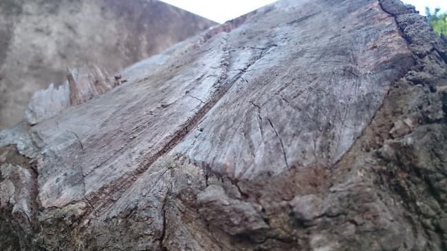 Acá se observa al ampliar, en los detalles del tronco, el efecto de enfoque que destacamos anteriormente.
