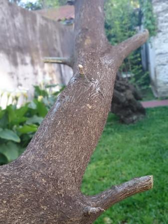 El modo de desecfoque, en la parte superior de la rama se comienza a ver el efecto ya trabajando.