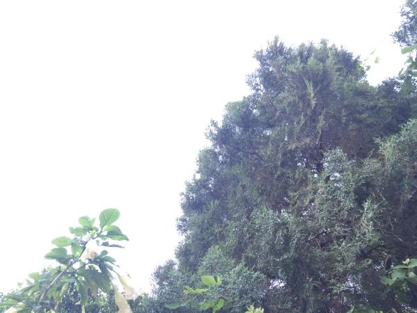 Imagen con medición en el área de los arboles.