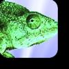numericalchameleon-icono