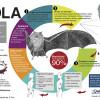 Las infografías nos presentan información compleja en forma interesante, aquí vemos un ejemplo extraído de quintodia.net.